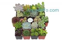 ihocon: Shop Succulents Unique Succulent (Collection of 20)