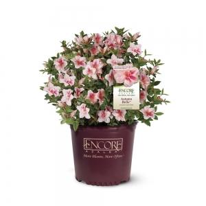 Home Depot: 多款花卉, 果樹, 盆子及園藝用品 一日特賣