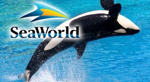 SeaWorld Orlando訂票優惠!! $59.99(原價$99.99)