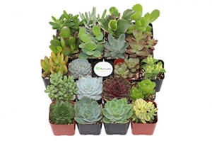 ihocon: Shop Succulents Unique Succulent (Collection of 20)多肉植物