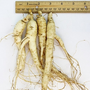ihocon: WOHO Cultivated Fresh Ginseng American Ginseng Jumbo 8oz (6-8 Roots) 新鮮花旗蔘