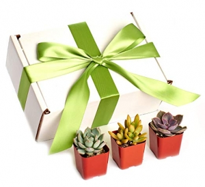 ihocon: ,Shop Succulents Premium Pastel Collection Live Mini Succulent, Collection of 12 多肉植物禮盒(12盆)