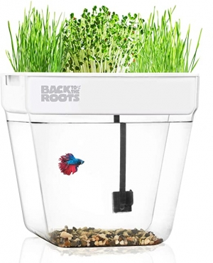 ihocon: Back to the Roots Water Garden, Mini Aquaponic Ecosystem 魚菜共生系統