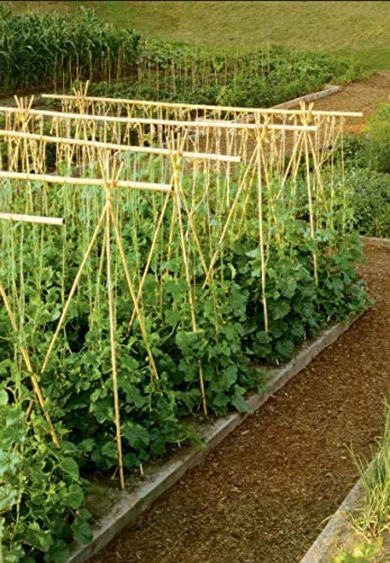 ihocon: GROW!T HGBB3 - 3 Foot Long Bamboo Stakes (Pack of 25)竹竿