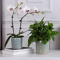 ihocon: Xela Aroma Flower Pot, Set of 2 花盆2個